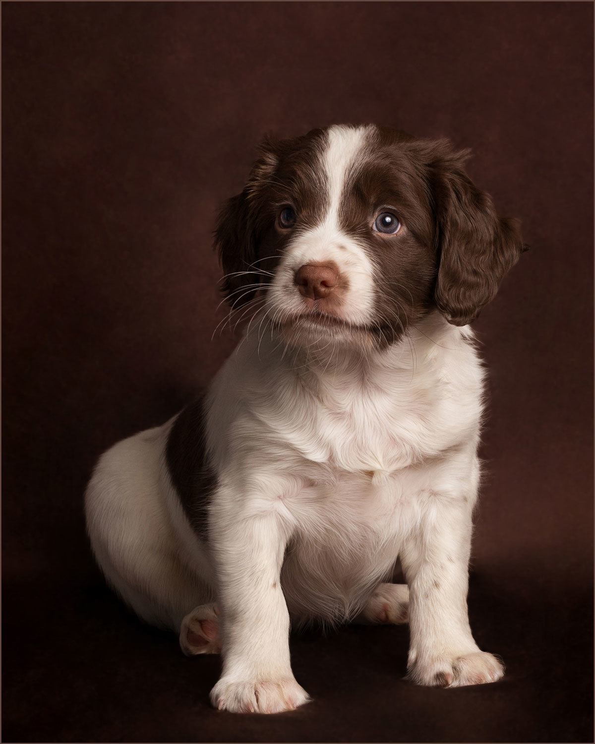 puppy portrait market harborough