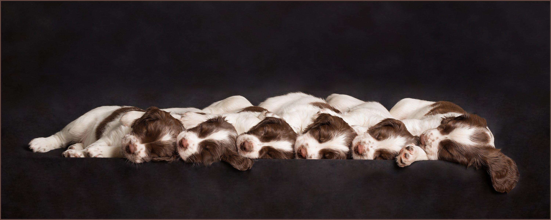 dog photographer market harborough puppy
