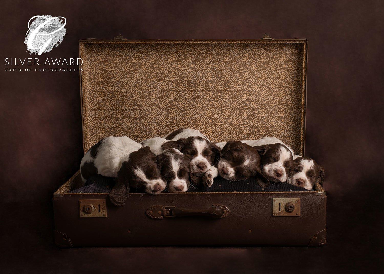 puppy photography market harborough