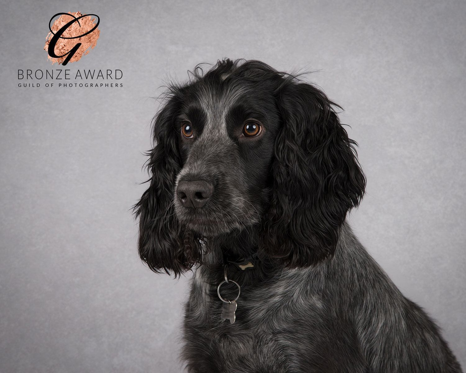 dog photography market harborough