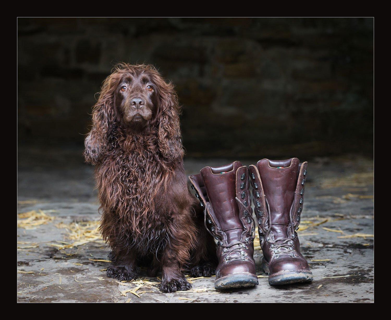 dog photographer leicester