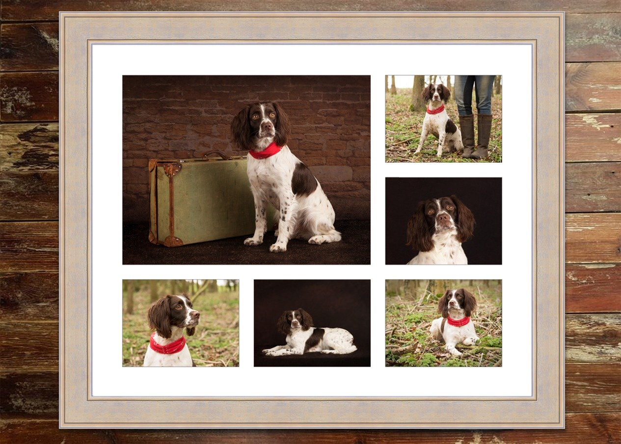 dog photographer market harborough