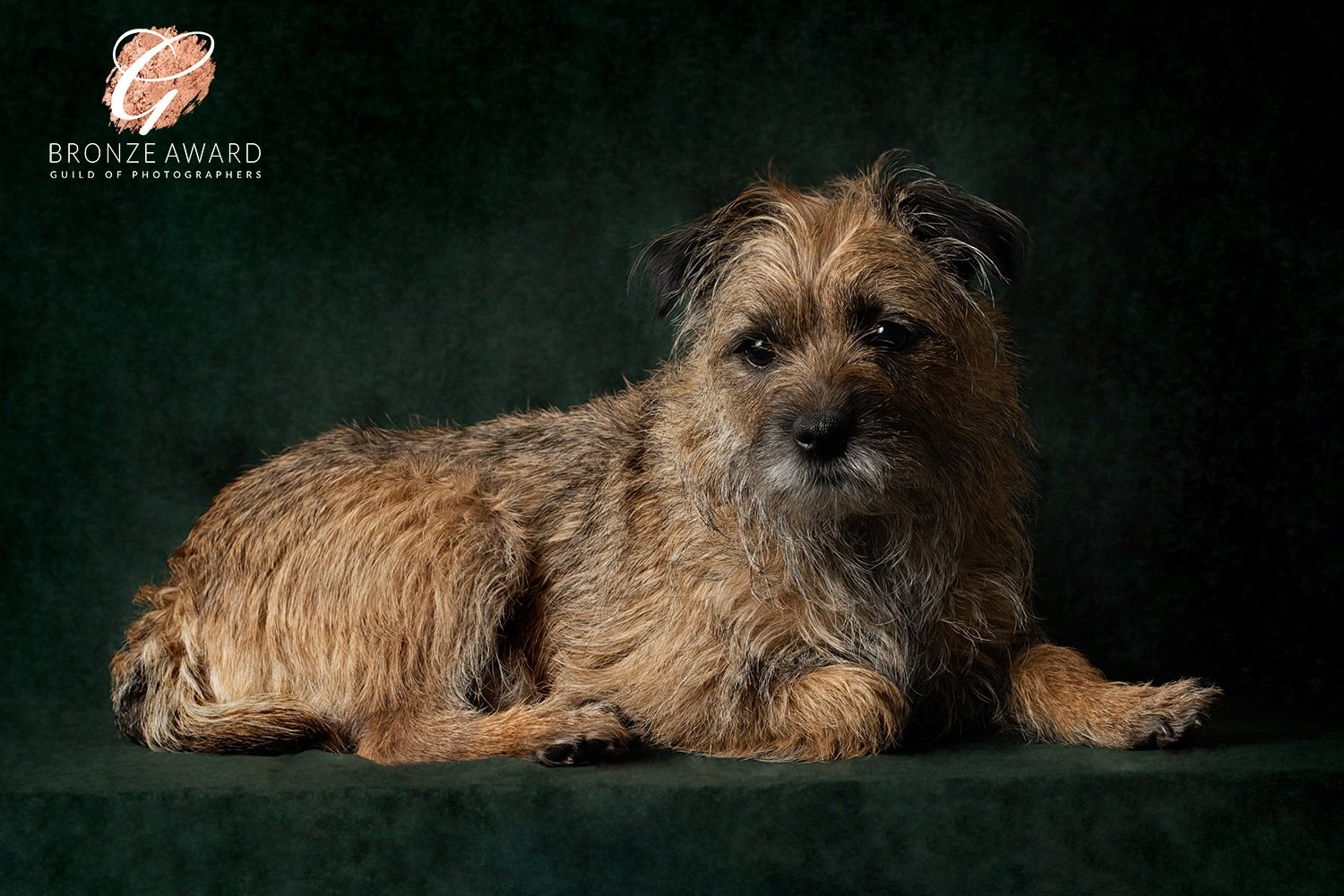 dog portrait market harborough