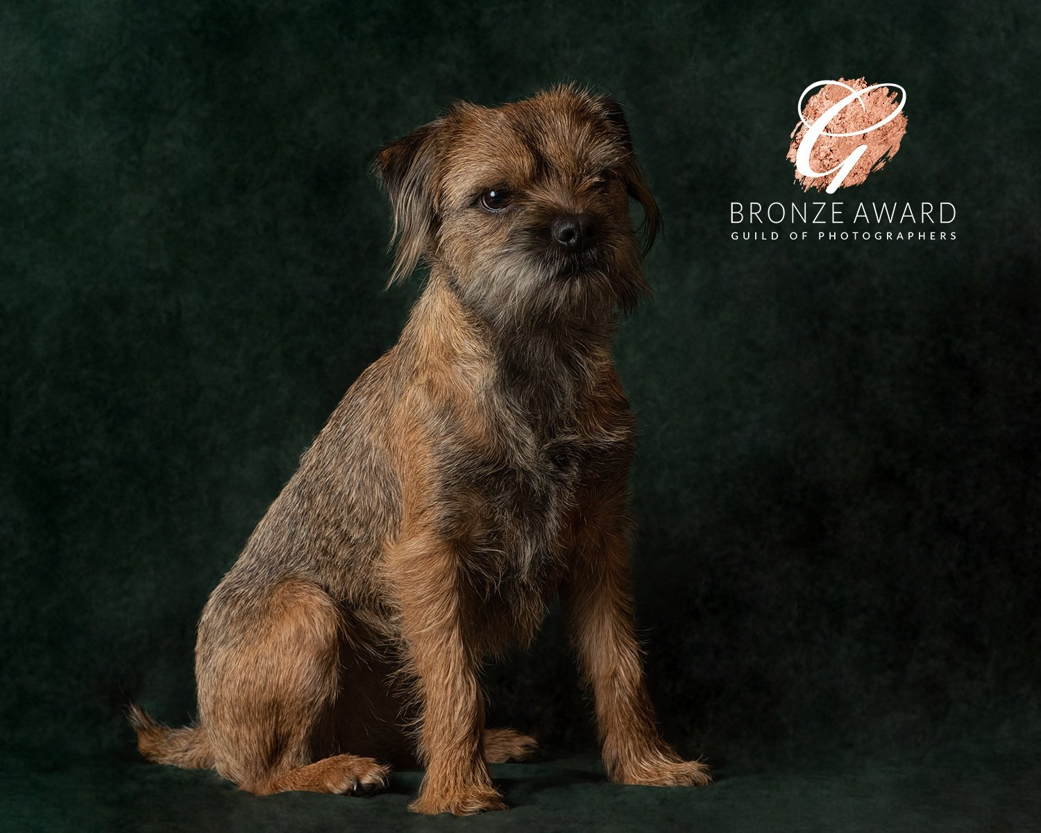 dog portraits Market harborough