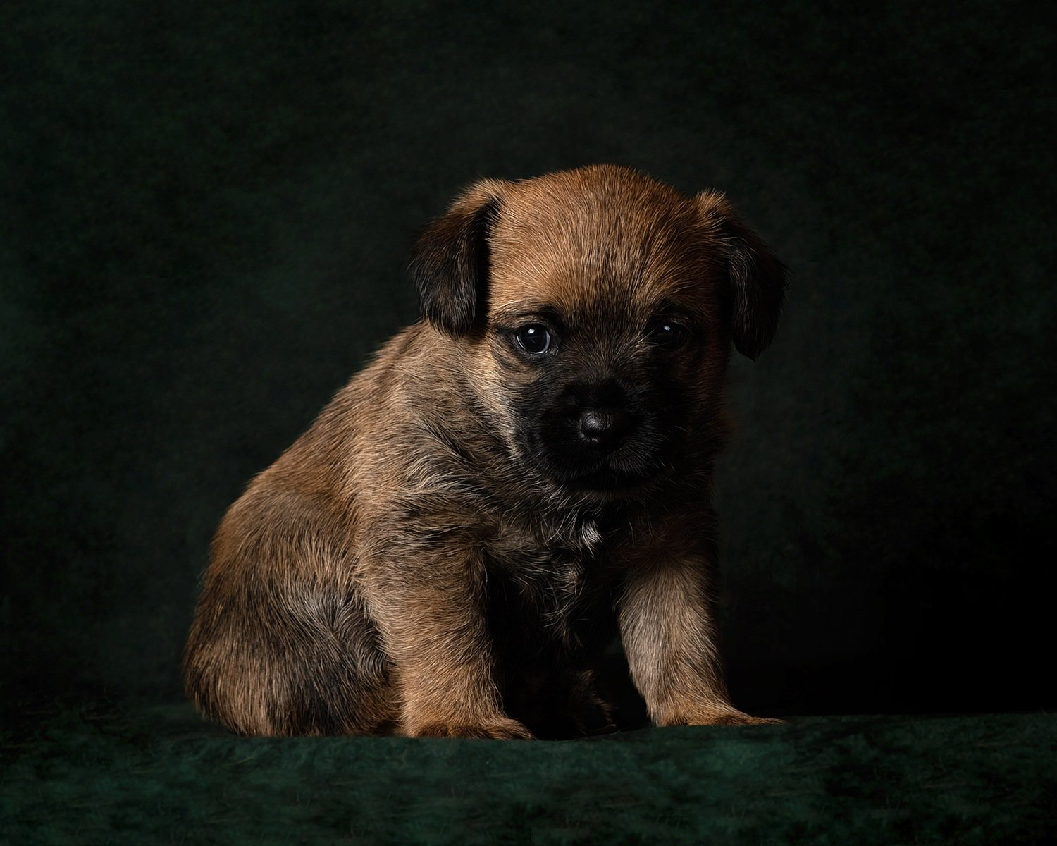 puppy photography market harborough