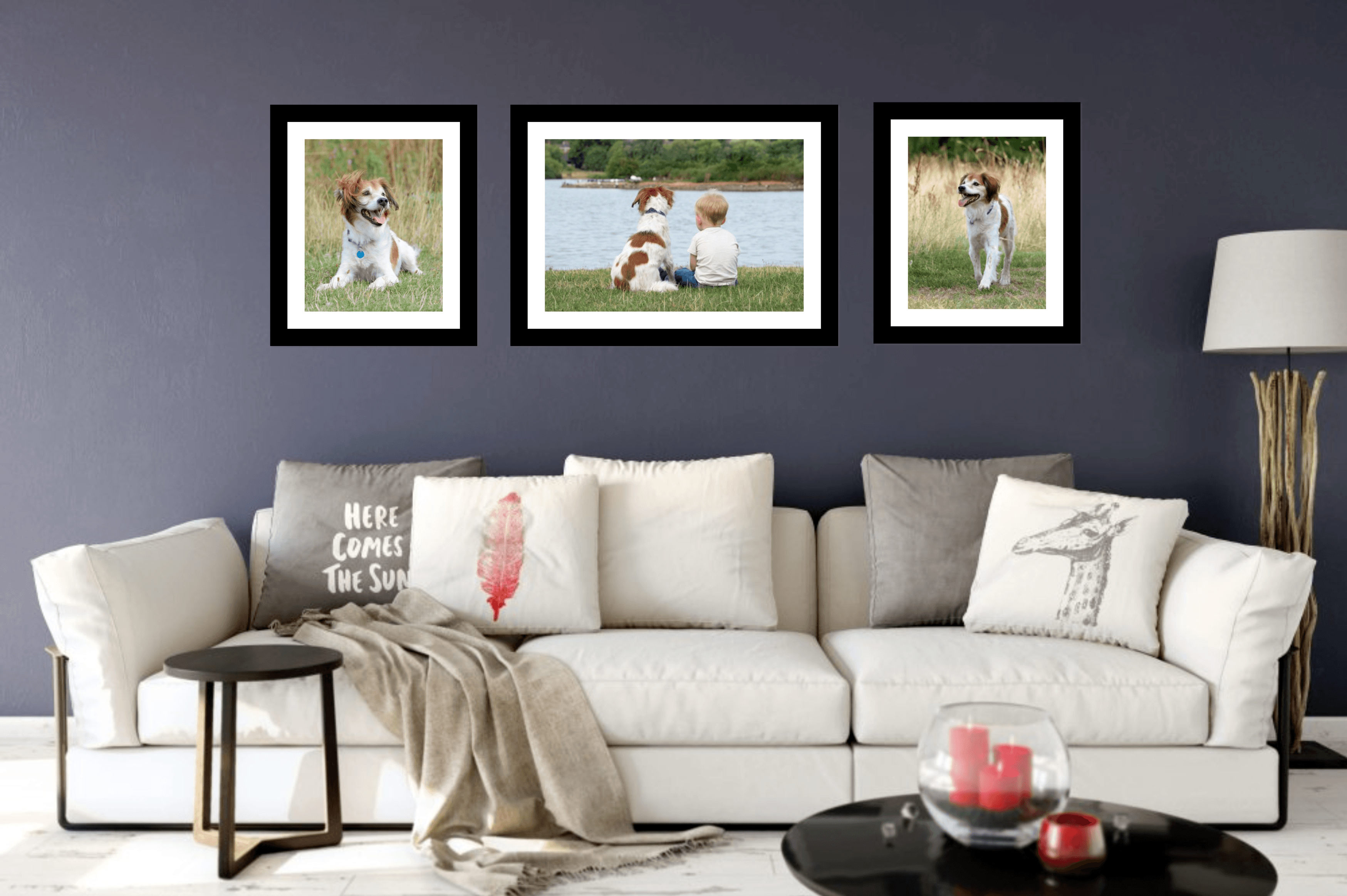 dog photography corby