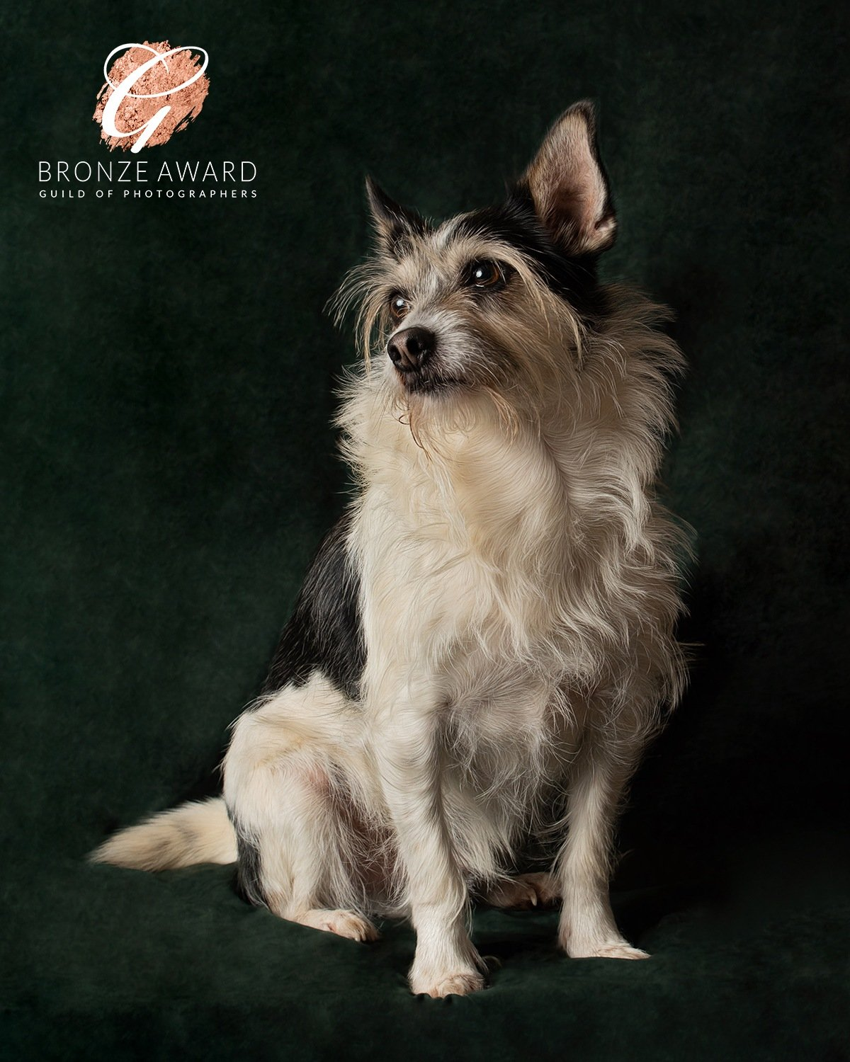 crossbreed dog portrait