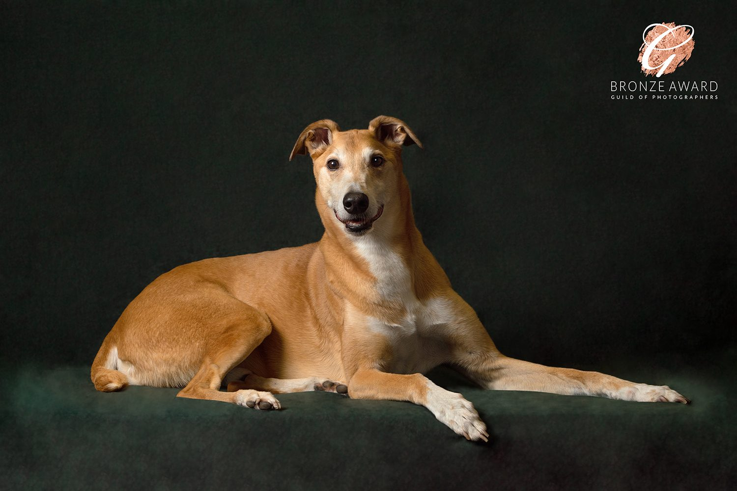lurcher dog photography